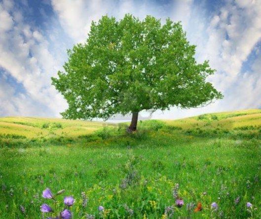Gli alberi rendono tutto più bello